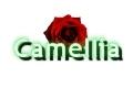Camellia Firma Handlowo-Usługowo-Produkcyjna Dominika Doniec